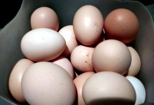 Uova del Pollaio